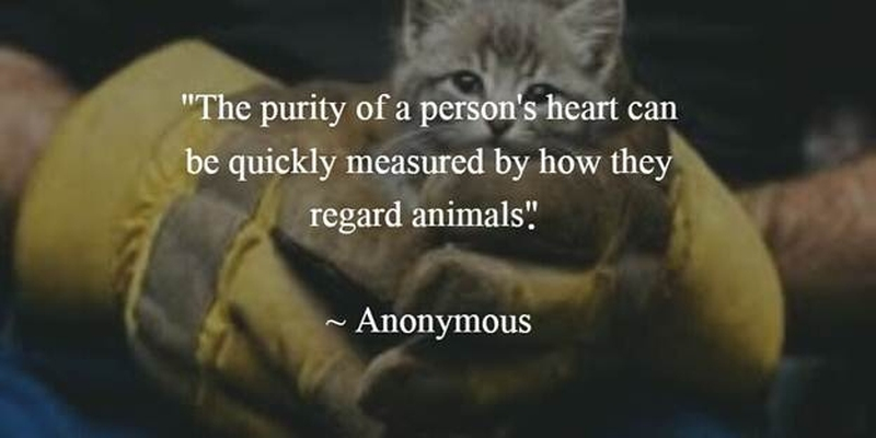 Animals Quotes Glamorous 27 Animal Rescue Quotes To Awaken Our Awareness Of Protecting