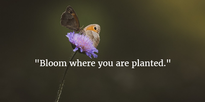 25 Flowers Blooming Quotes That Will Make Your Day Enkiquotes
