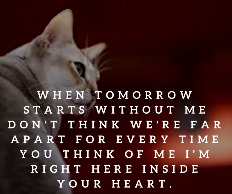 Quotes Death Endearing Quotes About Cat Death For You To Kiss Away The Pain  Enkiquotes