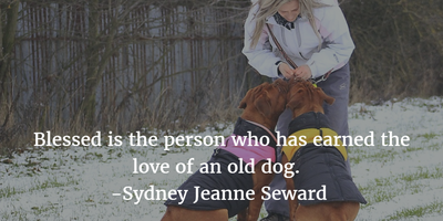 25 Heart Touching Quotes About Old Dogs - EnkiQuotes