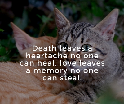 Loss Of A Cat Quotes Cool Quotes About Cat Death For You To Kiss Away The Pain EnkiQuotes