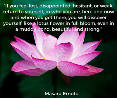 Beautiful Lotus Flower Quotes Enkiquotes