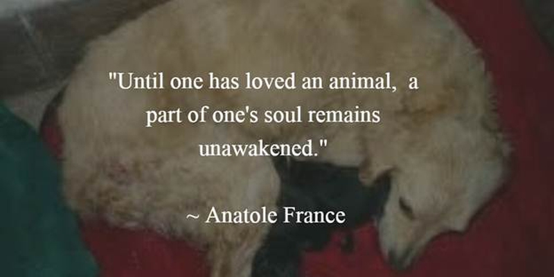 Animals Quotes Impressive 27 Animal Rescue Quotes To Awaken Our Awareness Of Protecting