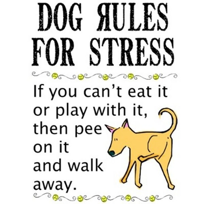 Get Inspiration From The Dogs Rule And Walk Away
