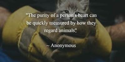 27 Animal Rescue Quotes to Awaken Our Awareness of ...