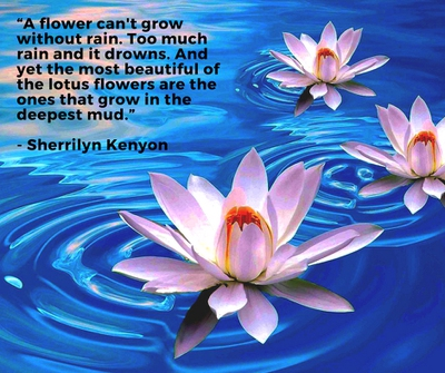 Beautiful lotus flower quotes enkiquotes true words form lotus flower quotes do you agree mightylinksfo Choice Image