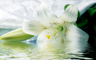 20 Profound Quotes About Lilies Enkiquotes