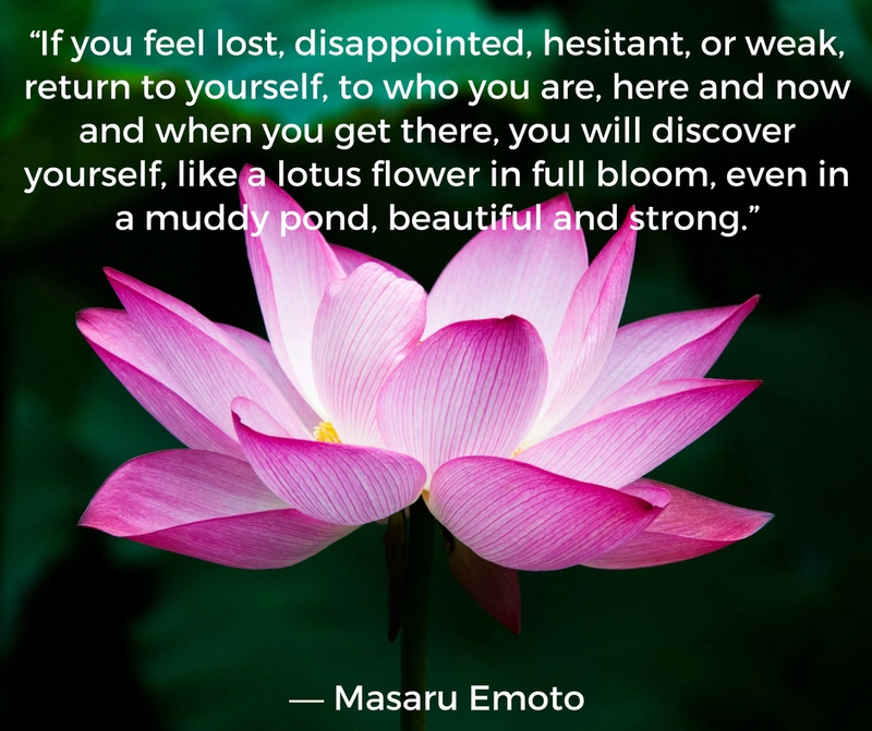 20 Quotes About The Beautiful Lotus Flower