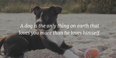 Cute Animal Quotes That Will Instantly Convert You into an ...