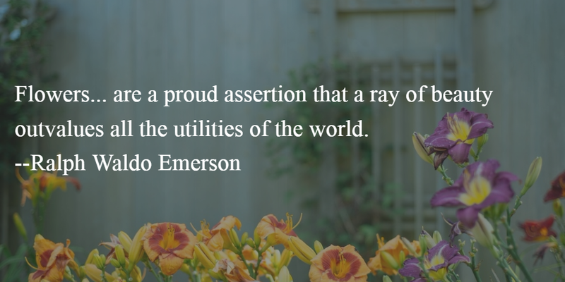 22 Most Beautiful Quotes About Loving Flowers