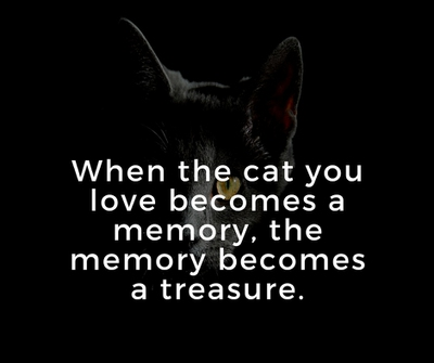 Quotes About Cat Death for You to Kiss Away the Pain ...