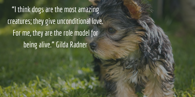 25 Dog Quotes Love And Loyalty Centered Enkiquotes