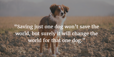 25 Rescue Dogs Quotes: Be Kind to Them - EnkiQuotes