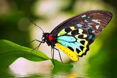 20 Butterfly Inspirational Quotes That Will Make You Think Enkiquotes