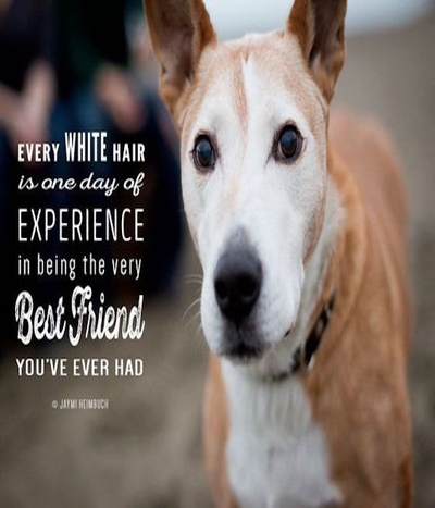 20 Dog Love Quotes from Pinterest   EnkiQuotes