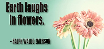 20 Quotes About Flowers Understand Beauty Everywhere Enkiquotes